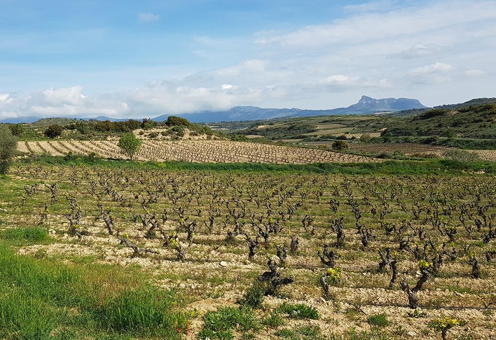 Foto paisaje LA PEDRERA